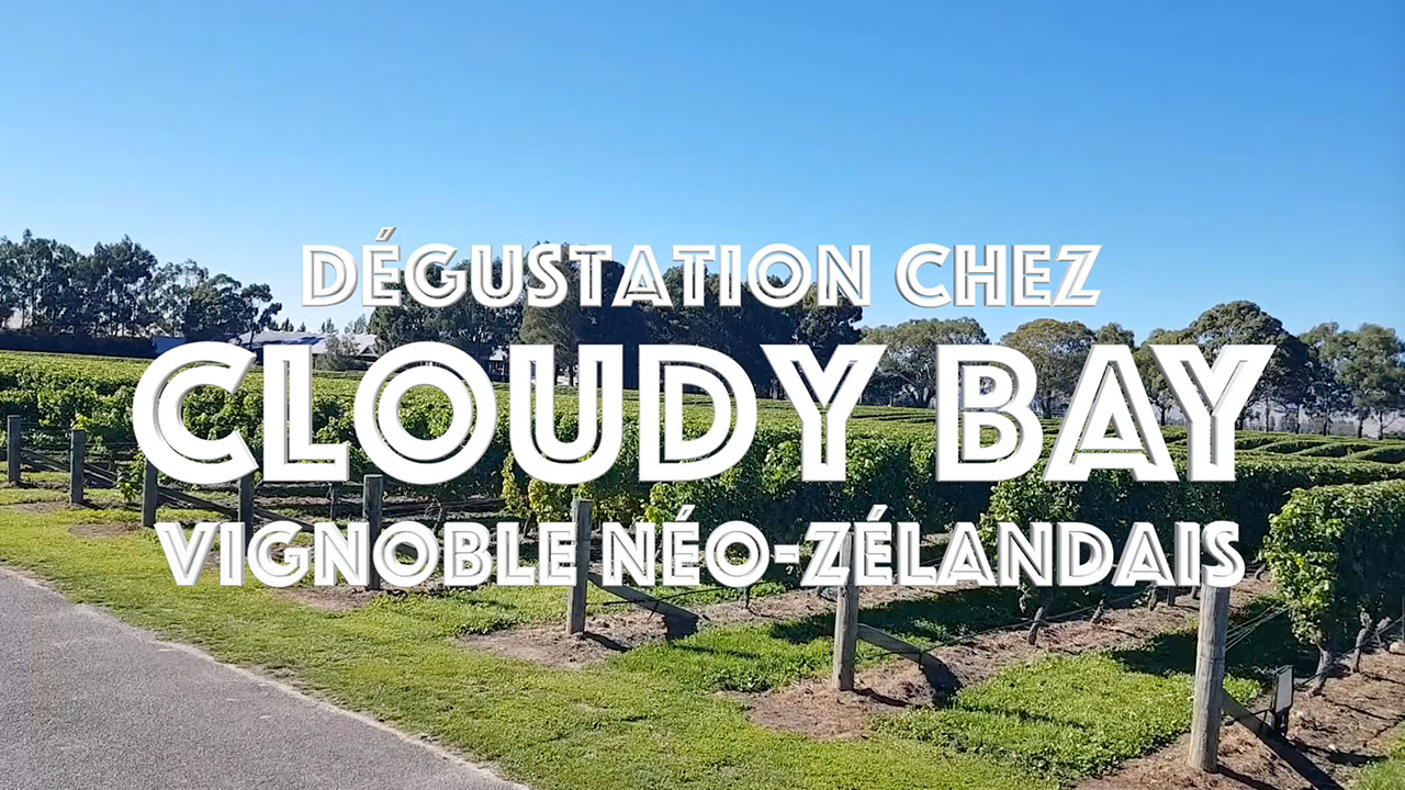 Miniature-Cloudy Bay